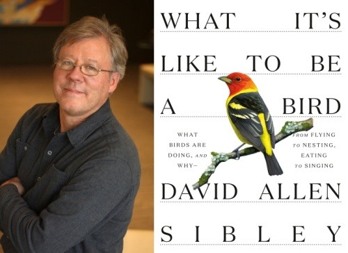 Book title: What it's like to be a bird by David Sibley